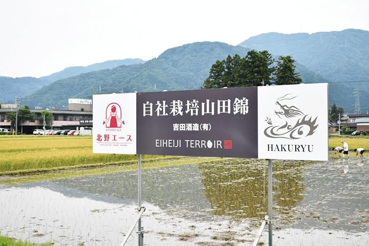 福井県 吉田酒造 × 北野エース 看板